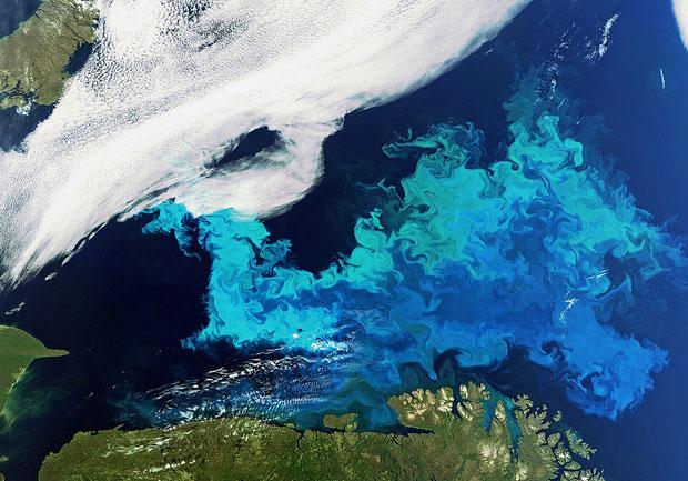 phytoplankton-620