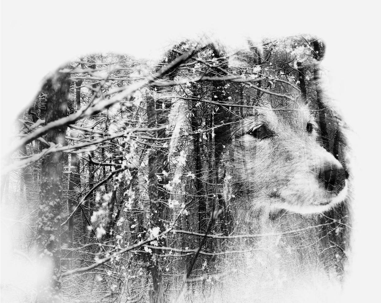 Snowflakes-Christoffer-Relander