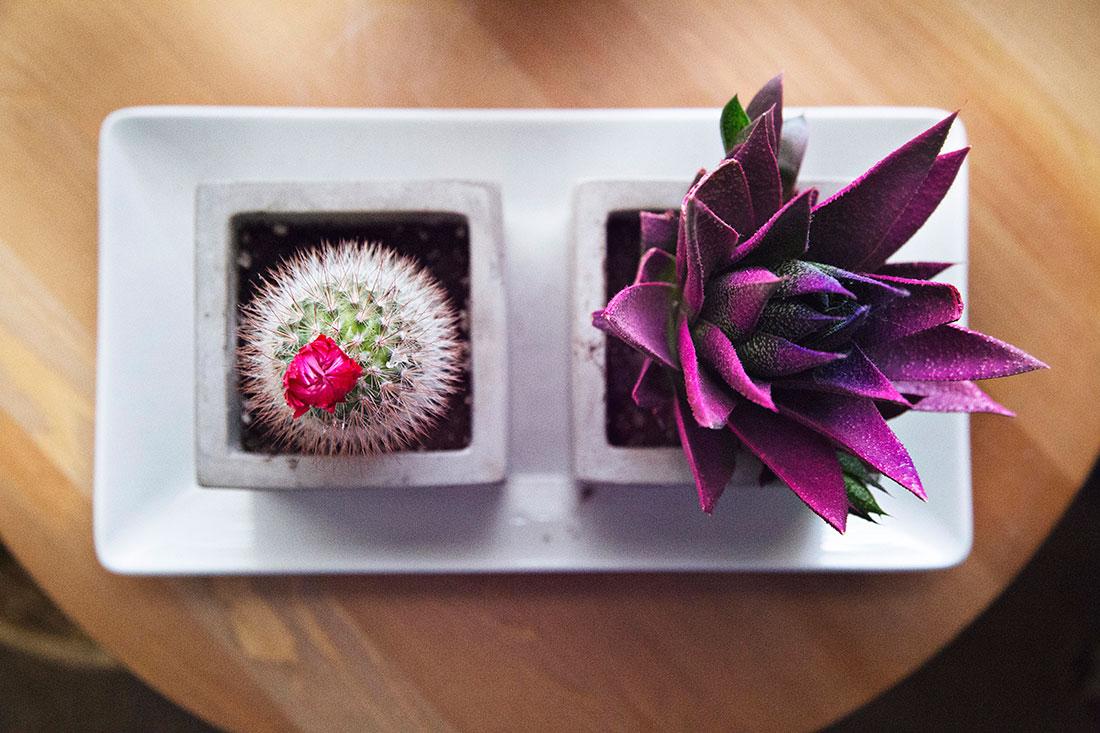 feng-shui-home-elements-plants-organic
