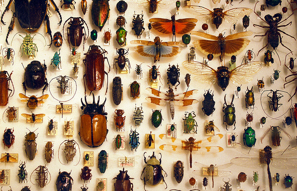 Dont Kill That Bug: New Research Shows Insects Have Feelings Just Like You