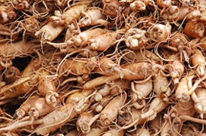 Ginseng: The Legendary Health Benefits of the Herb of Immortality and Strength