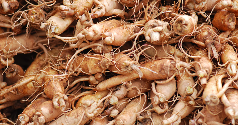 The Incredible Health Benefits of Ginseng: Herb of Immortality & Strength