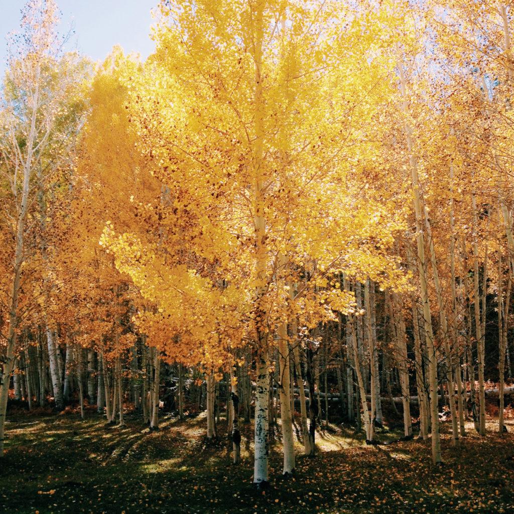 fall-ayurvedic-rituals