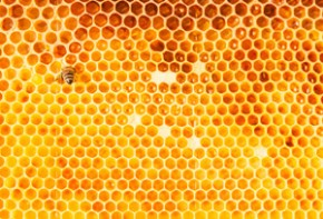 The Health Benefits of Raw Honey: A Sacred Food for Modern Times