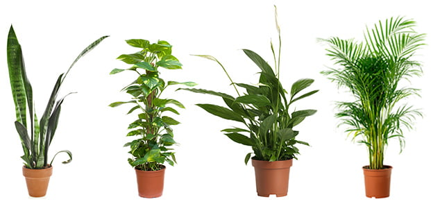 Air Purifying Plants Super Pack