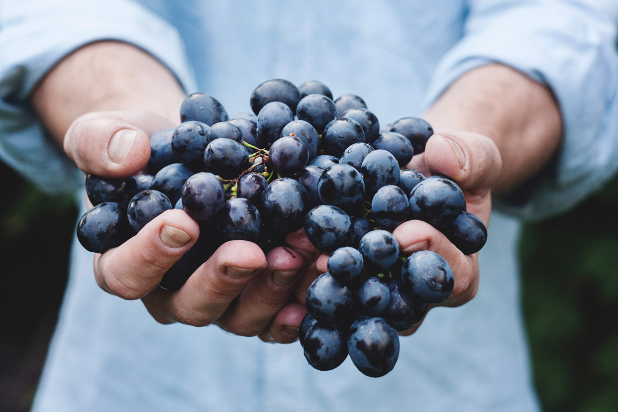 foods-that-help-with-anxiety-grapes-farm