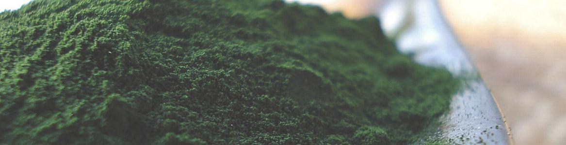 Marine-Thực vật phù du-tuổi thọ-chế độ ăn uống