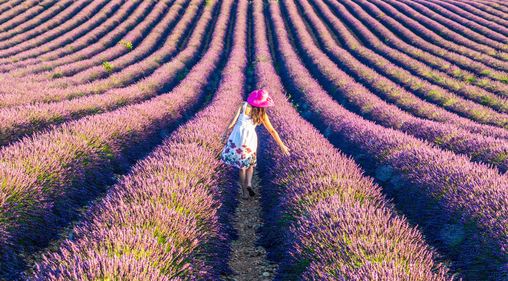 five-dharma-type-paths-lavender-fields-2
