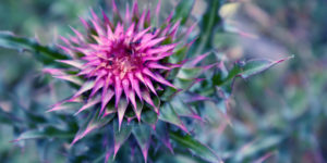 Magical Herbs: 23 Sacred Plants for Prosperity and Protection