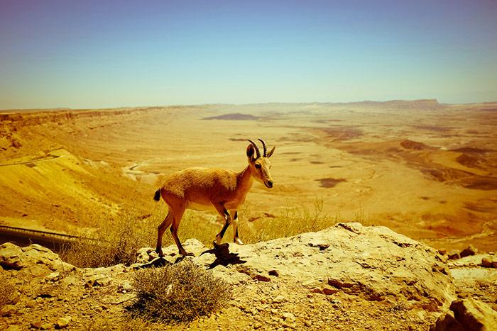 Mitzpe-Ramon-crater-negev-desert-israel-ibix