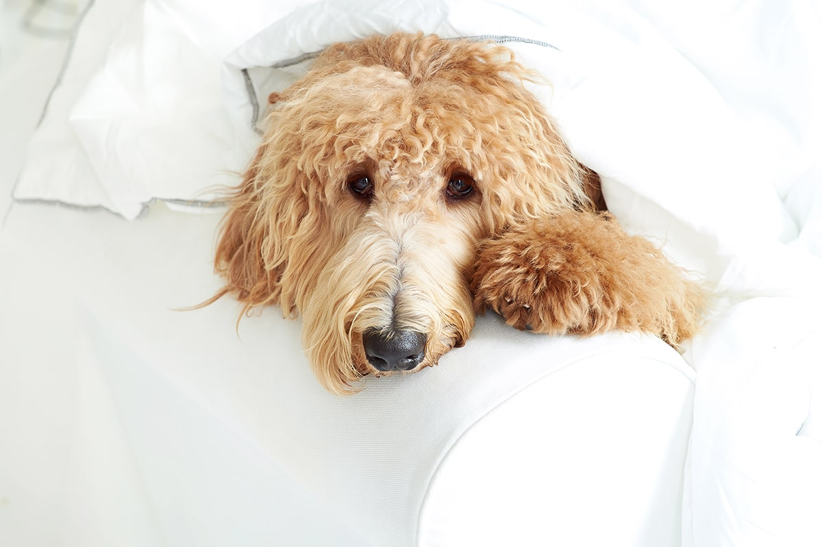 Dealing With Doggy Anxiety: How to Calm Your Pup Naturally