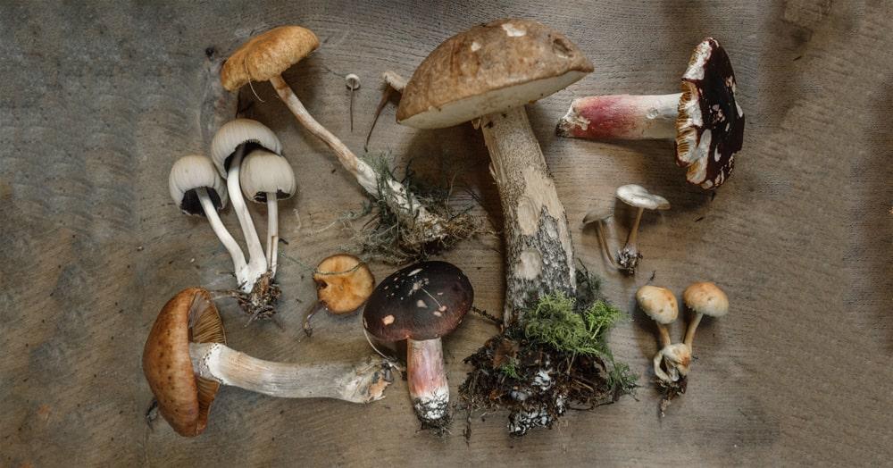 Top 4 Benefits of Wild Mushrooms